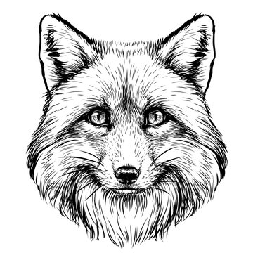 Fox. Graphic, sketch, black and white, hand-drawn portrait of a  Fox's head on a white background.
