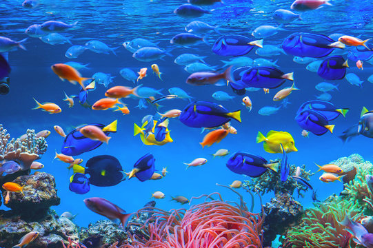 Colorful schools of tropical fish. Underwater coral reef background