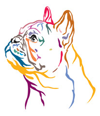 Colorful decorative portrait of French Bulldog vector illustration