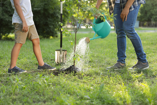 Dad and son watering tree in park on sunny day, closeup