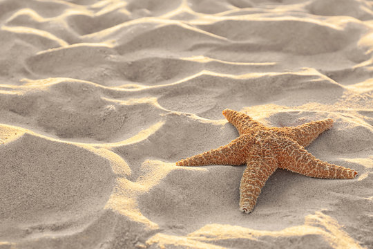 Sandy beach with beautiful starfish near sea on sunny summer day. Space for text