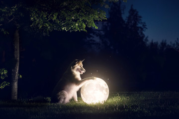 Tuinposter Wolf Dog and moon
