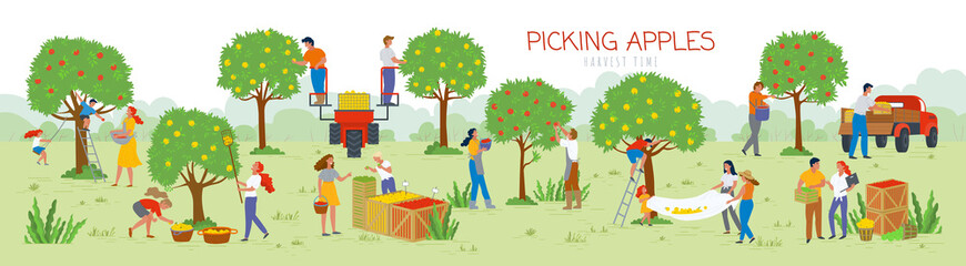 People picking apples in garden vector, man and woman gathering fruits from trees. Trucks and cars for transportation of food, summertime farming. Picking apples from tree to basket. Harvest festival Fototapete