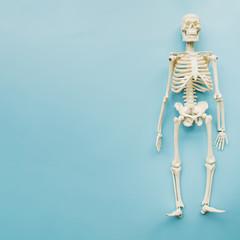 Top view skeleton