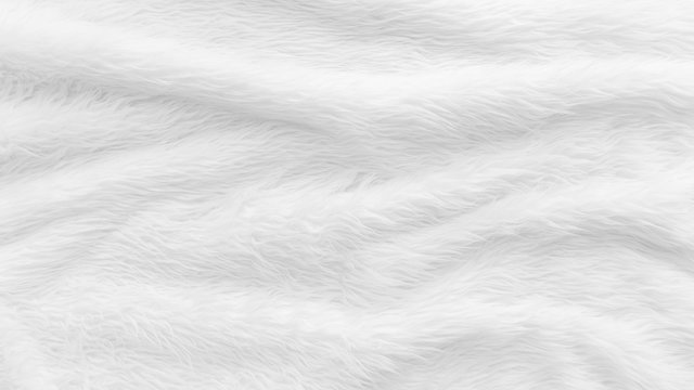 Fur background with white soft fluffy furry texture hair cloth of sheepskin for blanket and carpet interior decoration