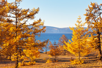 Baikal Lake autumn sunny afternoon. Olkhon Island. Beautiful autumn coastal larch yellowed forest on the background of the Small Sea Strait. Natural background