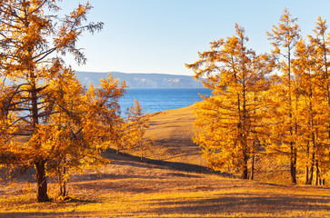 Baikal Lake in autumn sunny windy day. Magnificent autumn landscape with golden larch on the yellowed hills near the shore of the lake. Natural background