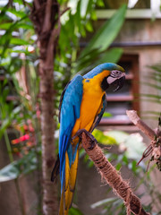 Poster Parrot Macaw New World Parrots in Captivity