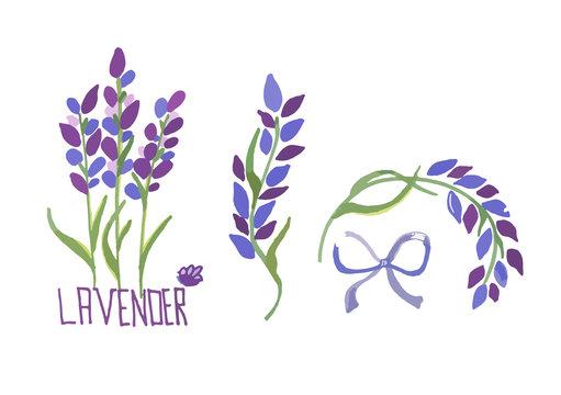 Vector illustration set of lavender flowers elements. Botanical illustrations of lavender branches in design element for decorating, greeting cards, postcards. Flat cartoon design.