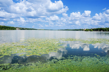 beautiful view of the lake: blue sky, forest and leaves of lilies on the water