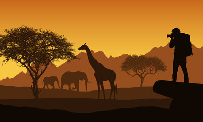 Realistic illustration of African safari with mountain landscape, trees and elephant and giraffe. Tourist with backpack takes photographing of animals. Under the orange sky with rising sun, vector