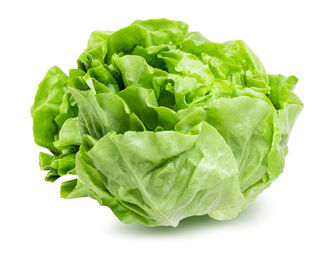 Fresh lettuce isolated on white background with clipping path