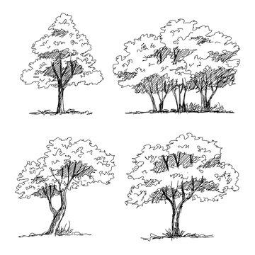 Set of hand drawn architect trees. Sketch Architectural illustration landscape