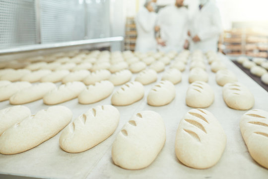 Raw bread is making on the automatic equipment line in the bakery.