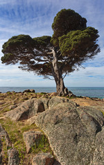 Cape Naturaliste beauty seen in solitary tree, ocean, and rocks