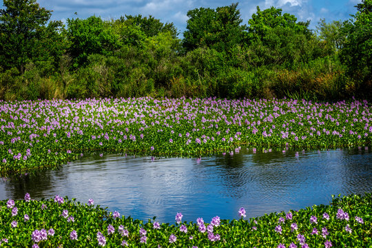 Southern blooming marsh land in the south of Texas