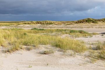 Dünenvegetation am Strand von Sankt Peter-Ording mit dunklen Wolken am Himmel in Nordfriesland, Schleswig-Holstein.