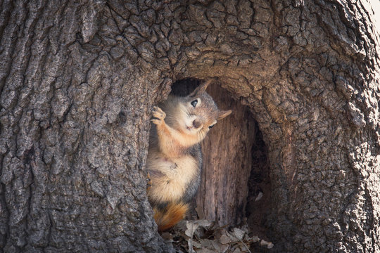 Squirrel's salute / Istanbul / TURKEY