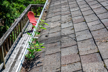 View from rooftop of asphalt roof shingles and gutter filled with tree debris and a new tree growing in the gutter, deck and red chair, and back yard below, time for gutter cleaning