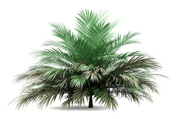 butia palm tree isolated on white background Wall mural