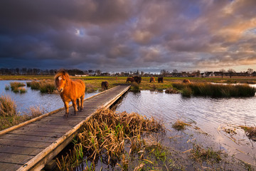 A shetland pony walking on a jetty over a river in a beautiful n