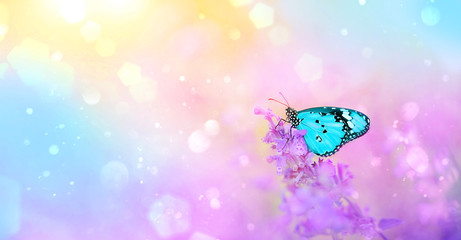 gentle spring or summer landscape with lilac flowers and butterfly on blurred abstract background. Wildflowers and beautiful blue butterfly on light artistic template. soft selective focus