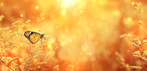 Fotobehang Oranje Beautiful orange butterfly on golden field meadow grass, in sunset rays, nature summer landscape, close up macro. gentle pastoral rural artistic image. summer autumn season. copy space. soft focus