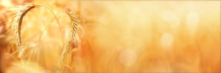 Golden wheat ears in autumn with bokeh Fototapete