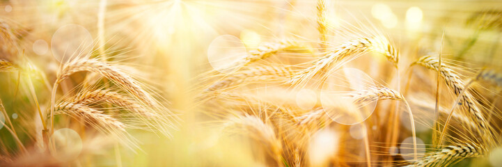 Golden wheat ears with sunbeams and bokeh Fotoväggar