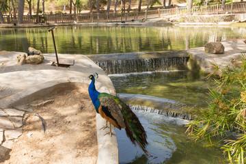 Guardamar del Segura Spain Reina Sofia Park tourist attraction