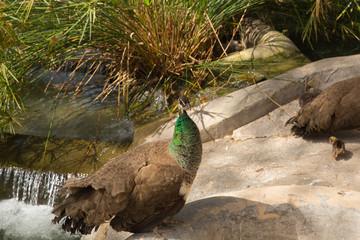 Guardamar park Costa Blanca Spain tourist attraction with wildlife, birds and gardens