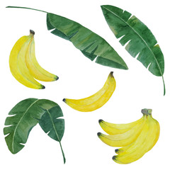 watercolor hand painted banana set with bananas and leaves isolated on white, banana elements for tropical botanical design, vector illustration