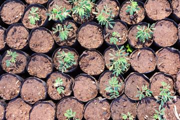 Cultivo de plantas en contenedores en vivero forestal