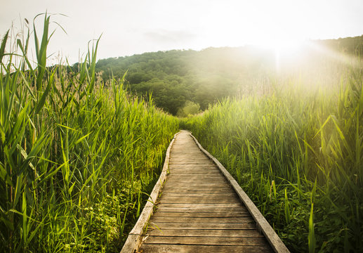 Appalachian trail in spring