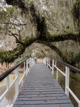 White bridge in Magnolia plantation and garden near Charleston, South Carolina