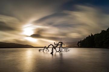 Single tree in lake