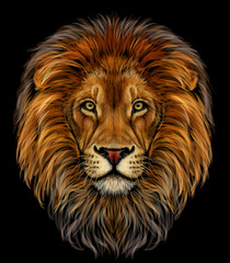 Lion. Color, realistic  portrait of a lion's head on a black background.