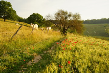Fototapete - Paysage Campagne 498