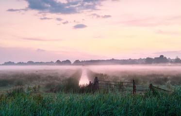 Wall Mural - purple misty sunrise over meadow