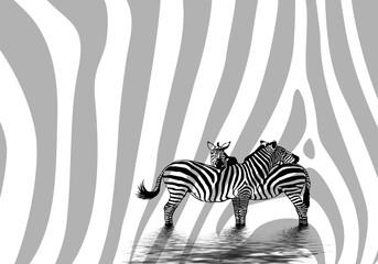 Minimalist image with zebras on white background