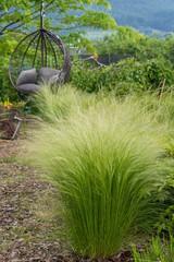 Fototapeta Ostnica na rabacie, piekny ogród , relaks wśród zieleni,