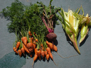 Freshly Harvested, Carrots, Beets and Corn