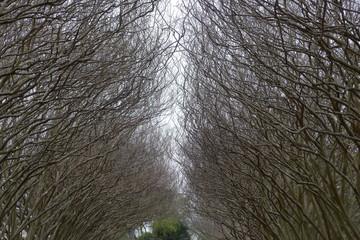 Enclosing Crape Myrtle Trees in Dallas Arboretum and Botanical Garden