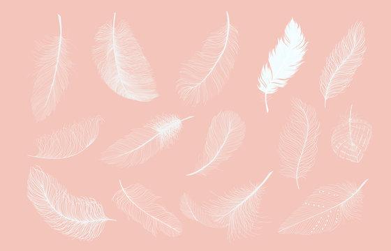 White feathers set