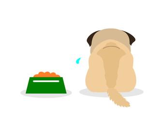 dog does not eat