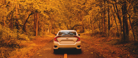 cars and road in forest tree autumn. Traveling in the forest