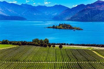 Picturesque vineyard