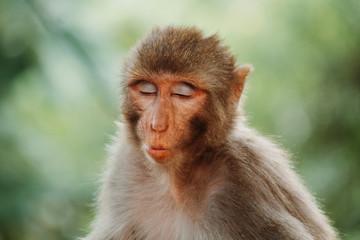 Obraz Portrait of a monkey making funny face - fototapety do salonu