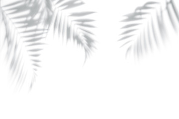 Canvas Prints Palm tree Shadows from palm trees on a white wall