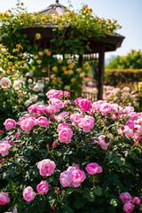 バラ / Roses